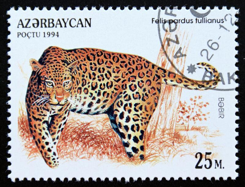 Postage stamp Azerbaijan 1994, Anatolian Leopard, Panthera pardus tullianus royalty free stock photo