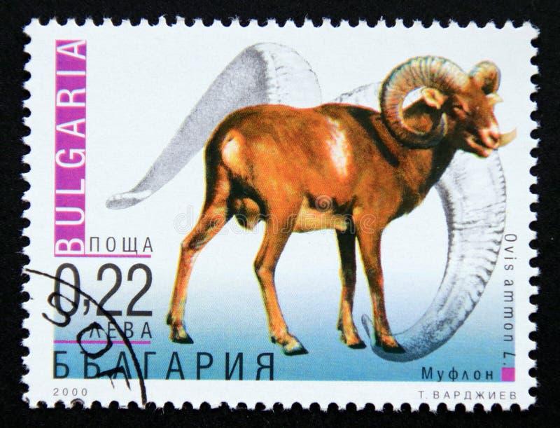 Postage stamp Bulgaria 2000, Argali, Ovis ammon ammon stock photos