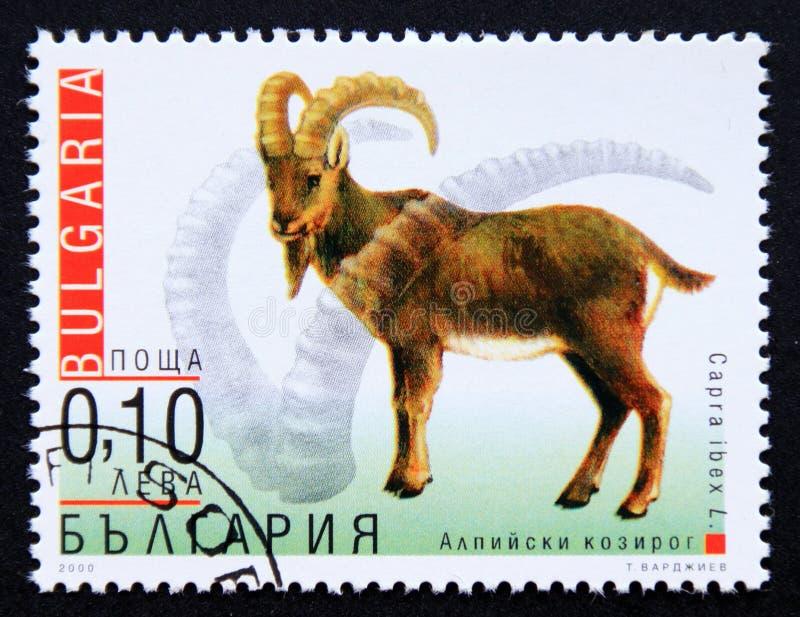 Postage stamp Bulgaria 2000, Ibex, Capra ibex royalty free stock photo