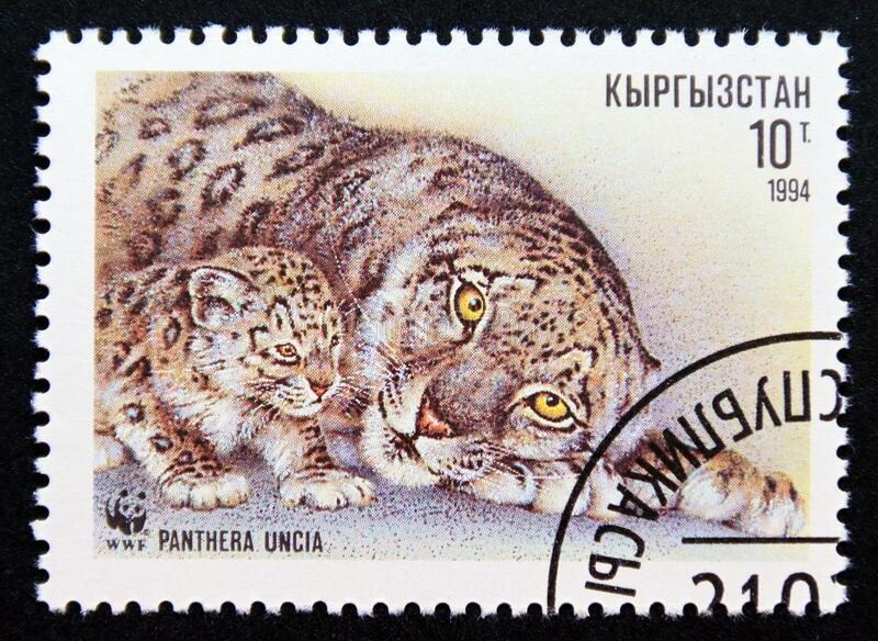 Postage stamp Kyrgyzstan 1994, Adult Snow Leopard, Panthera uncia and Cub royalty free stock photo