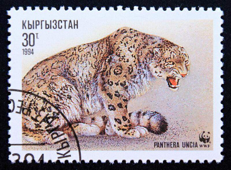 Postage stamp Kyrgyzstan 1994, Sitting Snow Leopard, Panthera uncia royalty free stock photography