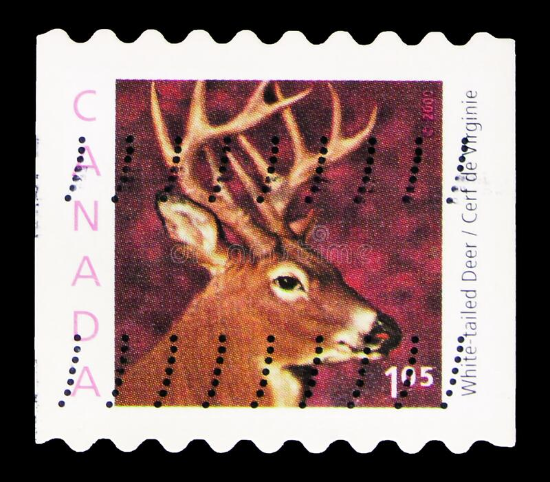 Postage stamp printed in Canada shows White-tailed Deer (Odocoileus virginianus) - booklet stamp, Wildlife Definitives serie,. MOSCOW, RUSSIA - OCTOBER 7, 2019 royalty free stock image