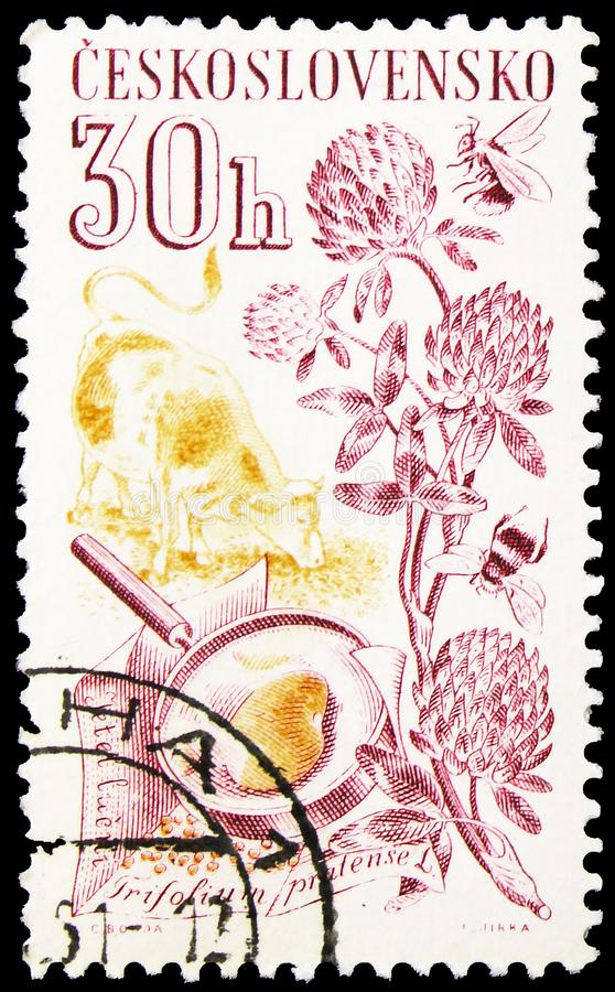 Postage stamp printed in Czechoslovakia shows Jetel lucni, Trifolium pratense L., Agricultural produce serie, circa 1961. MOSCOW, RUSSIA - OCTOBER 1, 2019 royalty free stock photos