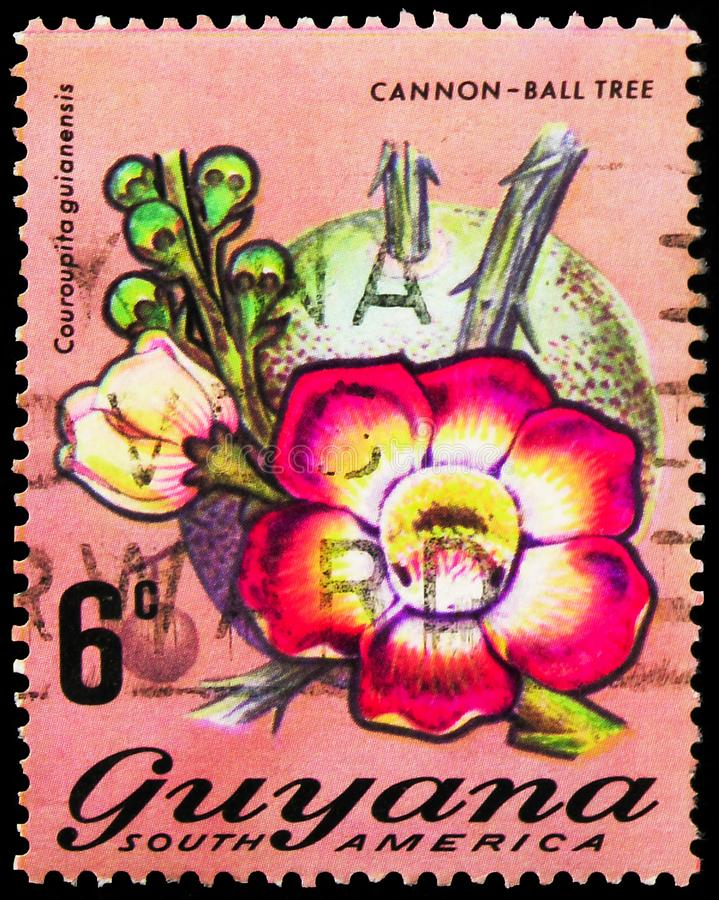 Postage stamp printed in Guyana shows Cannon-ball tree (Couroupita guianensis), Flowering Plants serie, circa 1971. MOSCOW, RUSSIA - SEPTEMBER 27, 2019: Postage royalty free stock photos