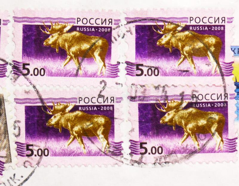 Postage stamp printed in Russia shows Moose Alces alces, 5th Definitive Issue of Russian Federation serie, circa 2008 stock image