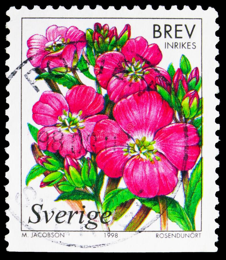 Postage stamp printed in Sweden shows Great willow herb, Wetland Flowers serie, circa 1998. MOSCOW, RUSSIA - NOVEMBER 4, 2019: Postage stamp printed in Sweden stock photo