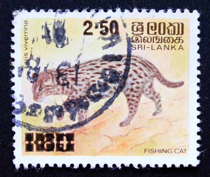Postage stamp Sri Lanka 1981, Fishing Cat, Prionailurus viverrinus royalty free stock image