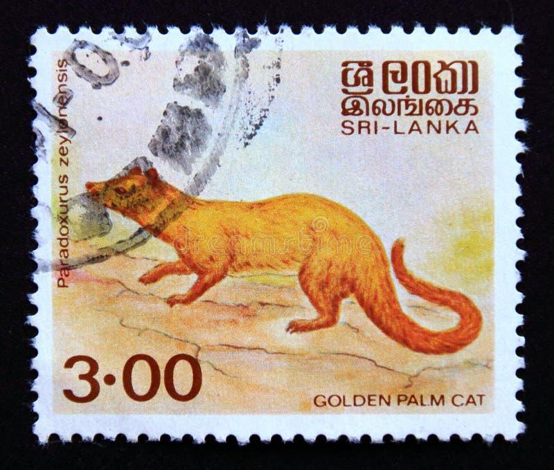 Postage stamp Sri Lanka 1989, Golden Palm Cat, Paradoxurus zeylonensis royalty free stock images