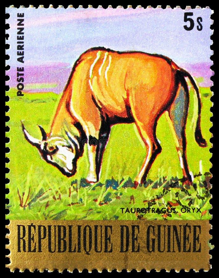 Postagstämpel i Guinea visar Common Eland (Taurotragus oryx), Endangered Animals serie, circa 1977 fotografering för bildbyråer