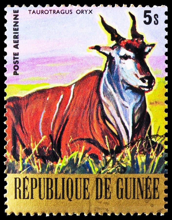 Postagstämpel i Guinea visar Common Eland (Taurotragus oryx), Endangered Animals serie, circa 1977 royaltyfri bild