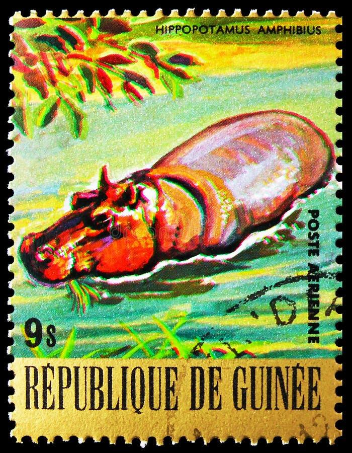 Postagstämpel i Guinea visar Hippopotamus (Hippopotamus amphibius), Endangered Animals serie, circa 1977 arkivfoton