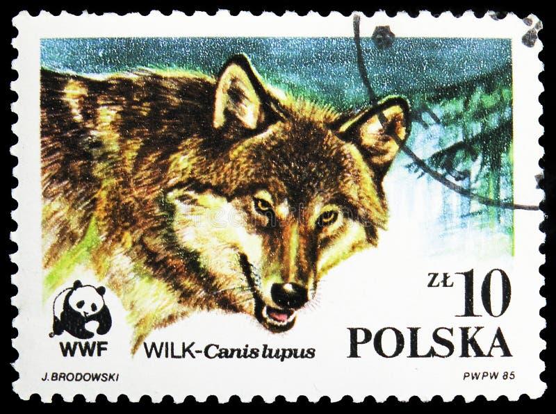 Postagstämpel i Polen visar Wolf (Canis lupus), World Wildlife Fund serie, circa 1985 arkivfoto