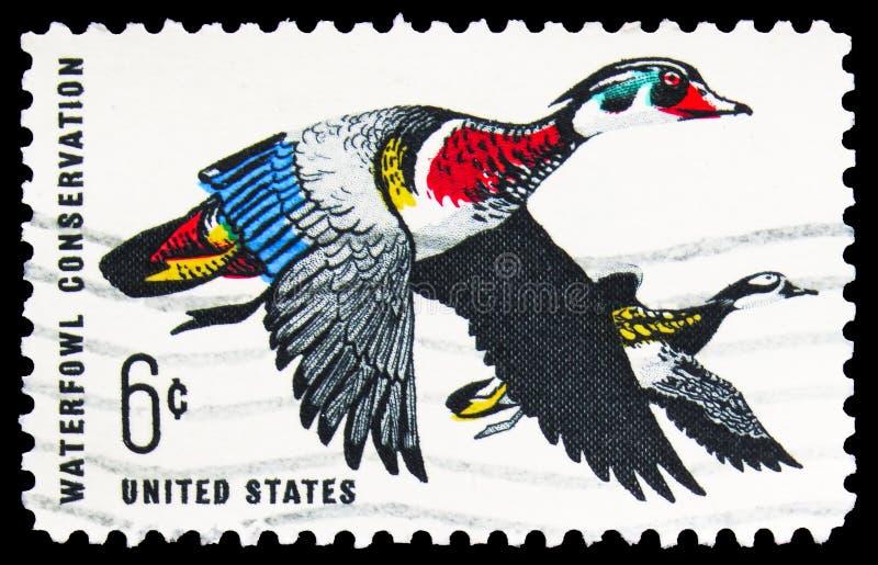 Postagstämpel tryckt i USA visar Wood Duck (Aix sponsa), 6 c - USA cent, Waterfowl Conservation Issue serie, circa royaltyfria bilder