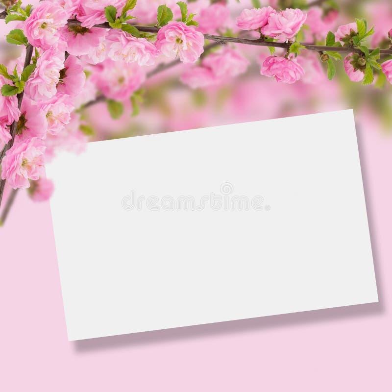 Postal con el árbol floreciente de la primavera fresca y lugar vacío para y imagen de archivo