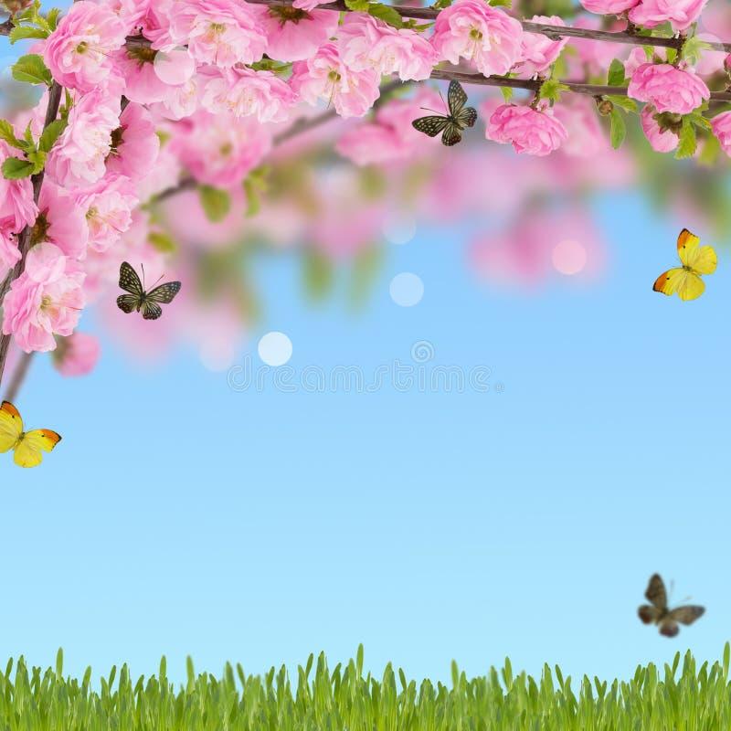 Postal con el árbol floreciente de la primavera fresca y lugar vacío para y foto de archivo