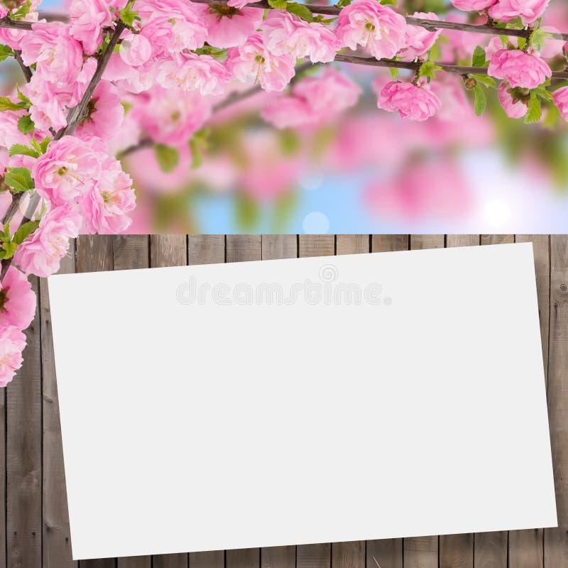 Postal con el árbol floreciente de la primavera fresca y lugar vacío para y imágenes de archivo libres de regalías
