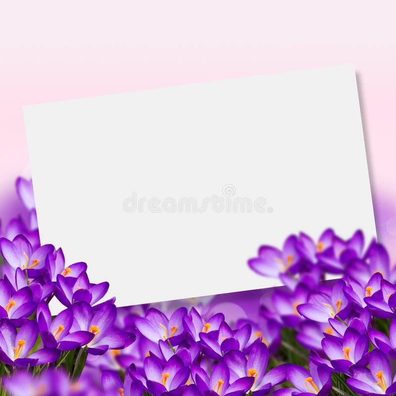Postal con el azafrán de las flores frescas y lugar vacío para su te fotografía de archivo