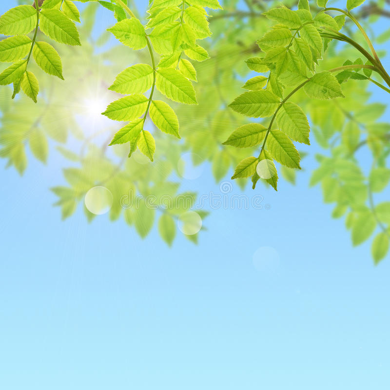 Postal con follaje verde fresco y lugar para su texto fotos de archivo