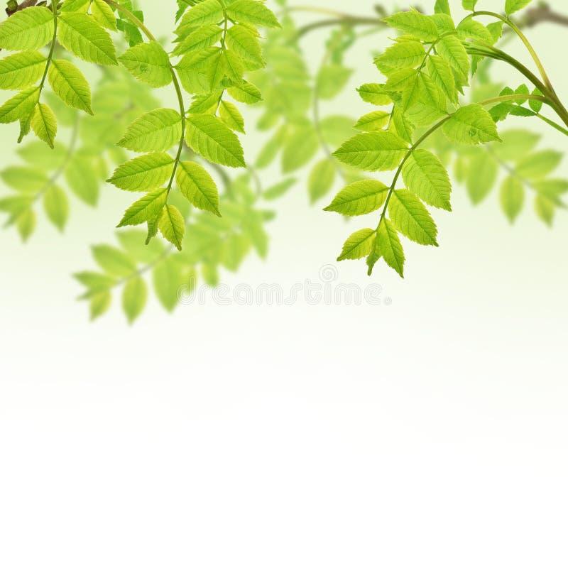 Postal con follaje verde fresco y lugar para su texto imagen de archivo libre de regalías