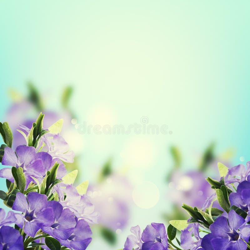 Postal con las flores elegantes imágenes de archivo libres de regalías