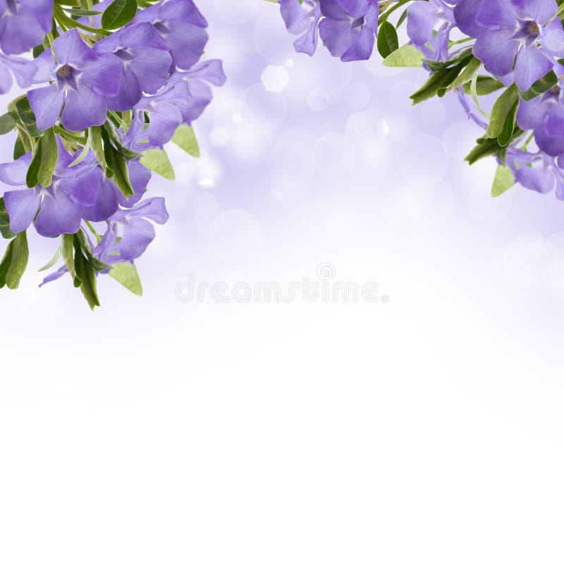 Postal con las flores elegantes imagen de archivo libre de regalías