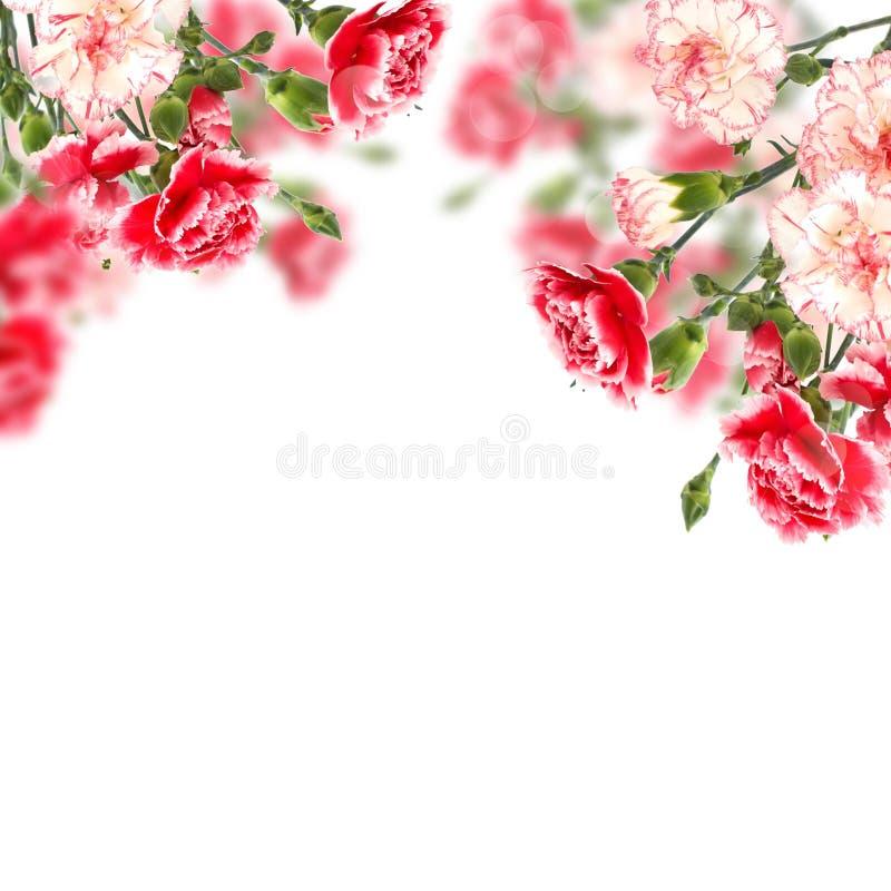 Postal con las flores elegantes y lugar vacío para su texto imagen de archivo libre de regalías