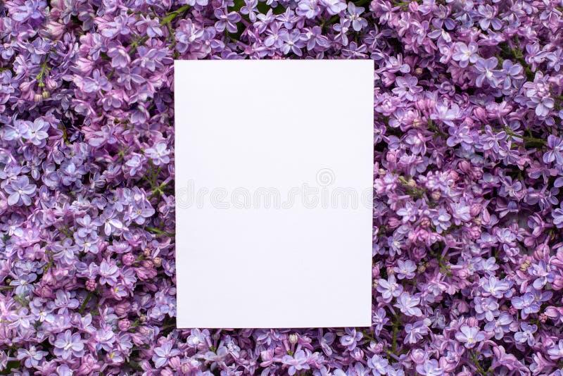 Postal con las flores espléndidas frescas de la lila y Empty tag para su fondo del texto, de la primavera y del flor del verano imagen de archivo libre de regalías