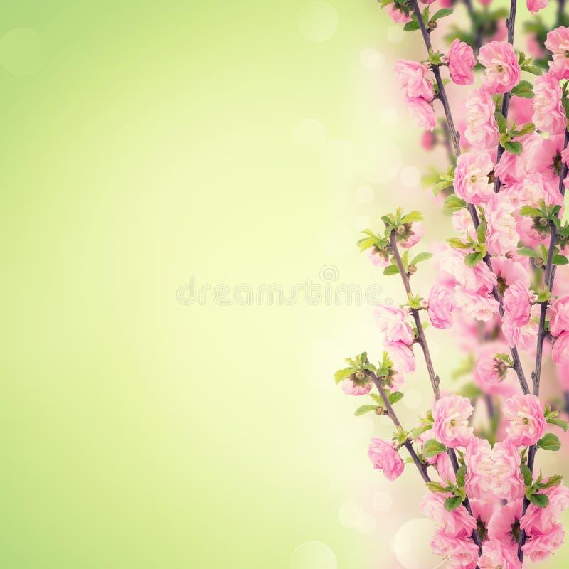 Postal con las flores frescas y lugar vacío para su texto imagen de archivo libre de regalías