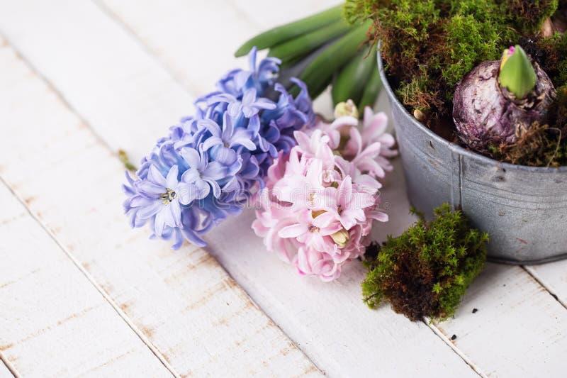Postal con los hyacinthes frescos imagen de archivo libre de regalías