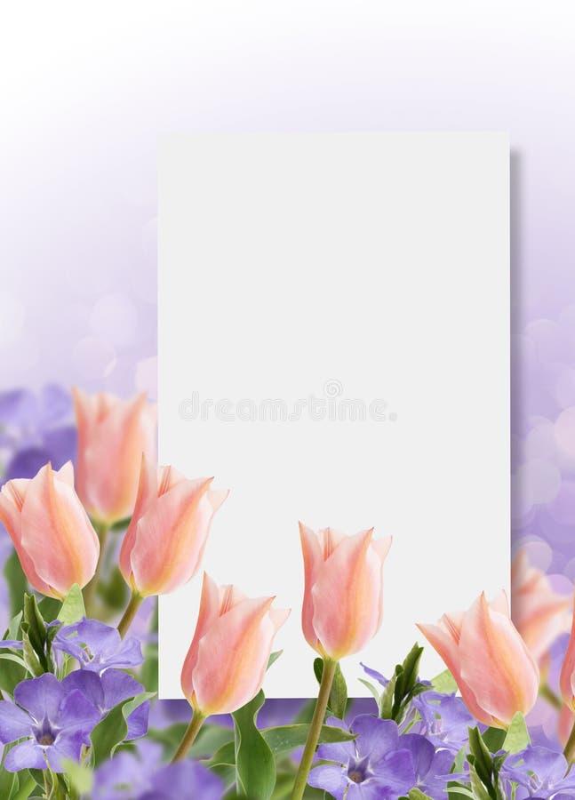 Postal con los tulipanes de las flores frescas y bígaro y pl vacío fotografía de archivo libre de regalías