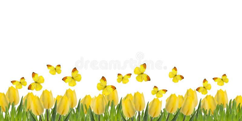 Postal con los tulipanes y la hierba frescos imagen de archivo
