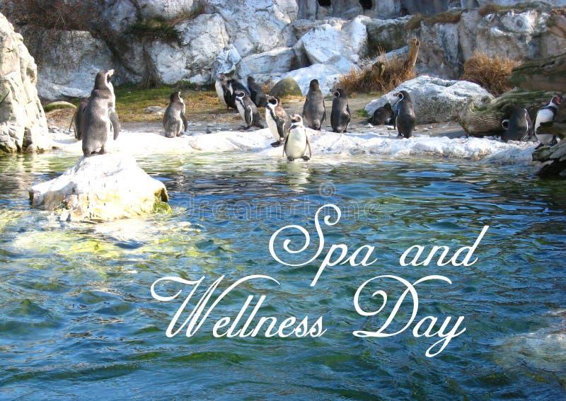 Postal con una atmósfera amistosa con los pingüinos en el parque zoológico en Viena foto de archivo libre de regalías