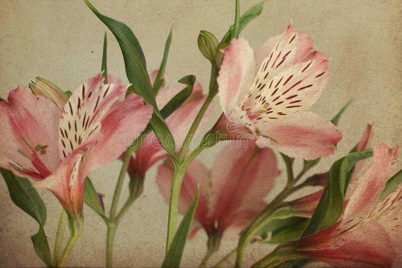 Postal del vintage con el Alstroemeria, retro foto de archivo libre de regalías