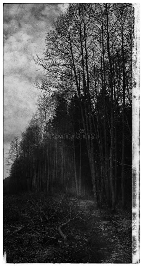 Postal irradiada Cyberpunk blanco y negro vertical del bosque detrás libre illustration
