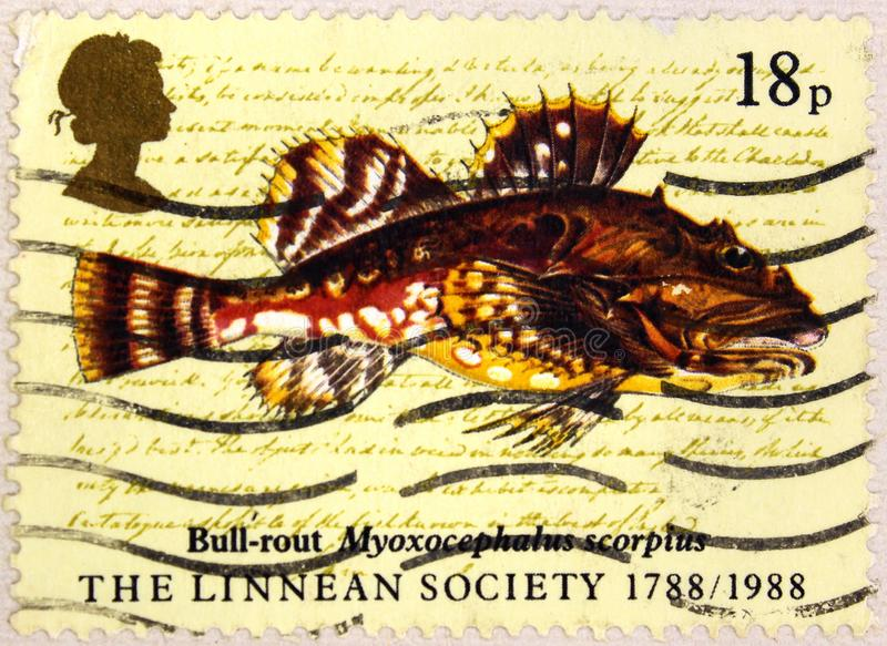 Postal stamp of Great Britain shows Bull-rout Fish, Myoxocephalus Scorpius royalty free stock image