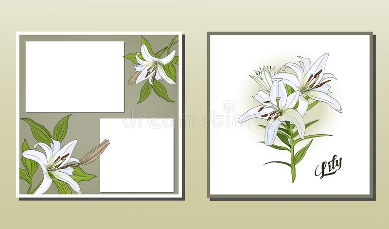 Postal y cartel cuadrados con las flores del lirio blanco ilustración del vector