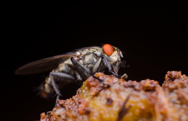 Postawa niewychowana komarnica fotografia stock