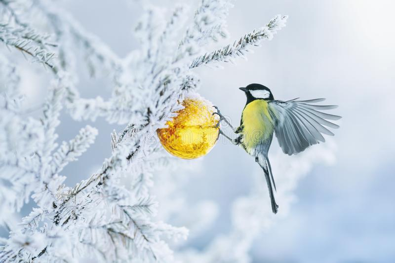Beautiful postcard with bird tit flying have glass Golden festive globe hanging on branch Christmas tree winter in Park stock image