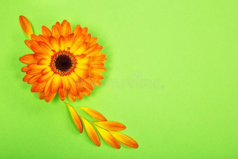 postcard from a bright orange gerbera flower royalty free stock photos