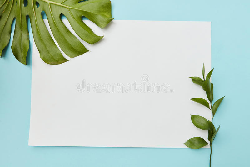 Postcard decorated leavs. Vertical frame on a blue background decorated with green leaves with a place under the text flat lay stock images