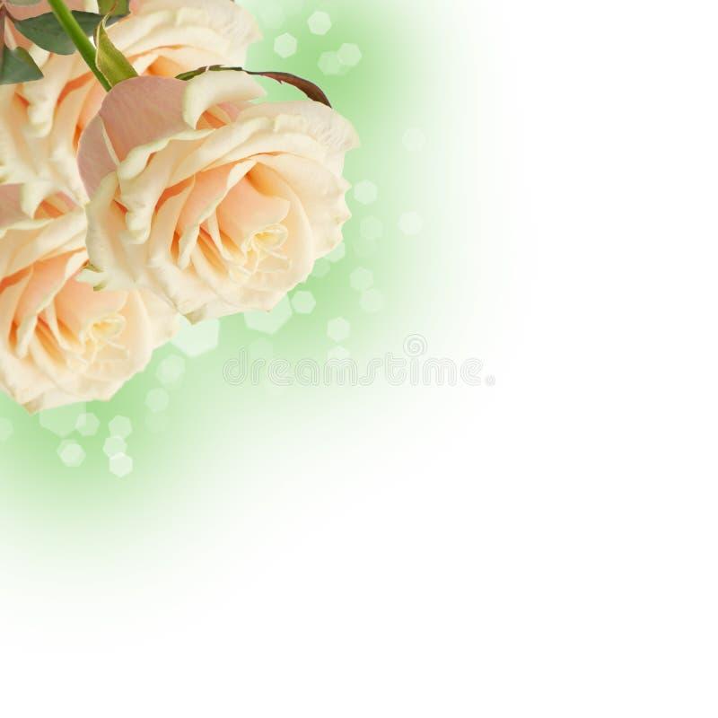 Postcard with elegant flowers stock image