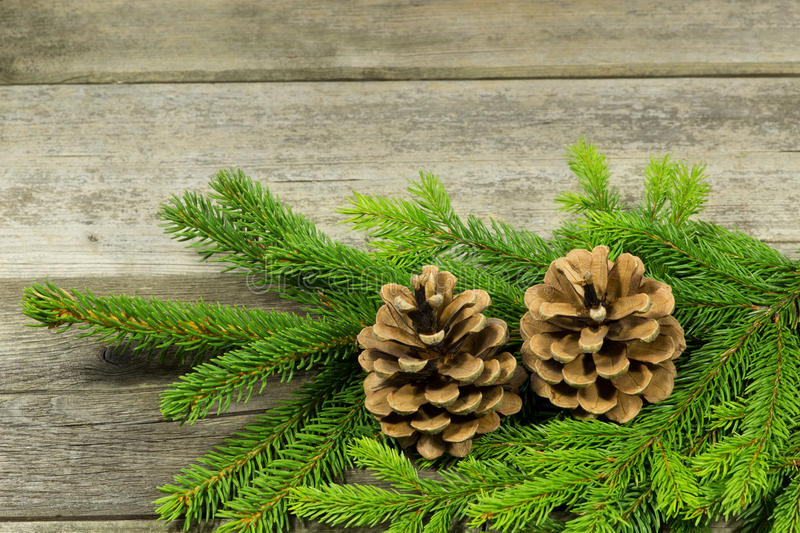Postcard with evergreens stock image