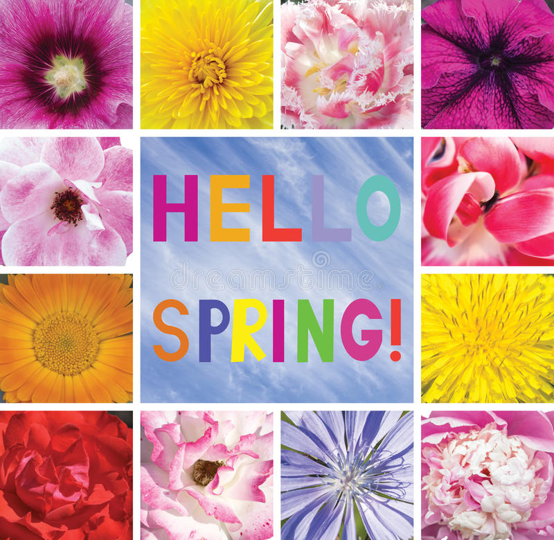 Postcard with flowers and the words Spring greetings. Hello Spring. vector illustration