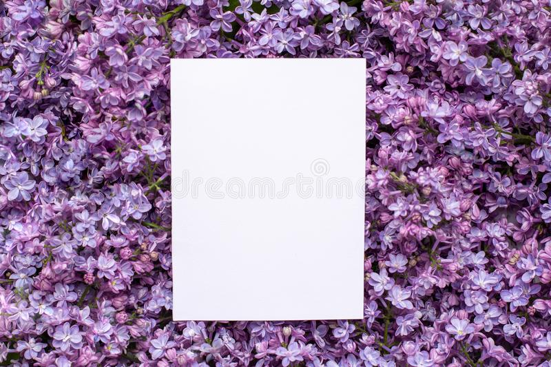 Postcard with fresh splendid lilac flowers and empty tag for your text  , spring and summer blossom background. royalty free stock image