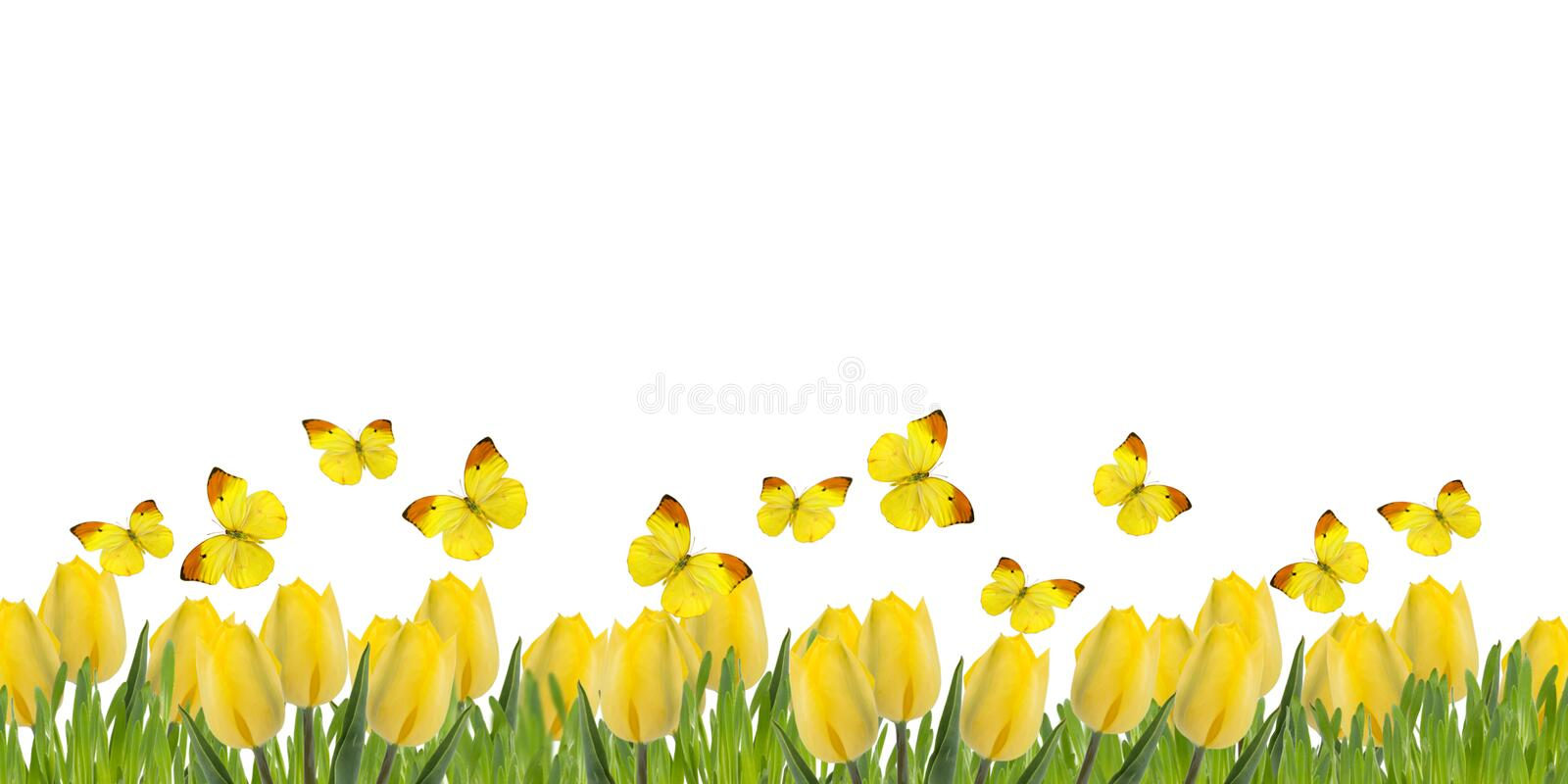 Postcard with fresh tulips and grass stock image
