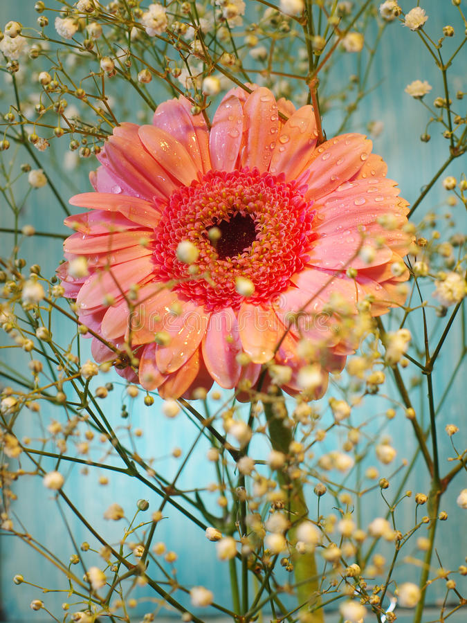 Postcard from gerbera royalty free stock photography