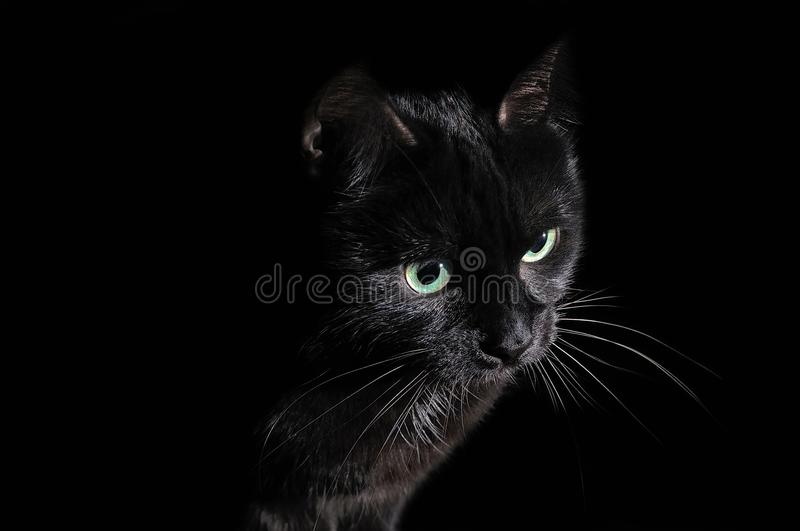 Postcard for Halloween: portrait of a black cat royalty free stock images