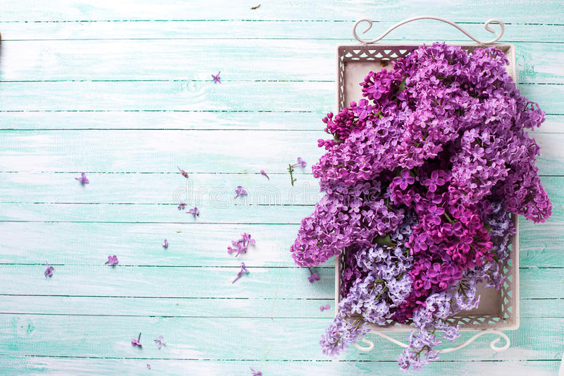 Postcard with lilac flowers. Fresh splendid lilac flowers on tray on turquoise painted wooden planks. Selective focus. Place for text royalty free stock image