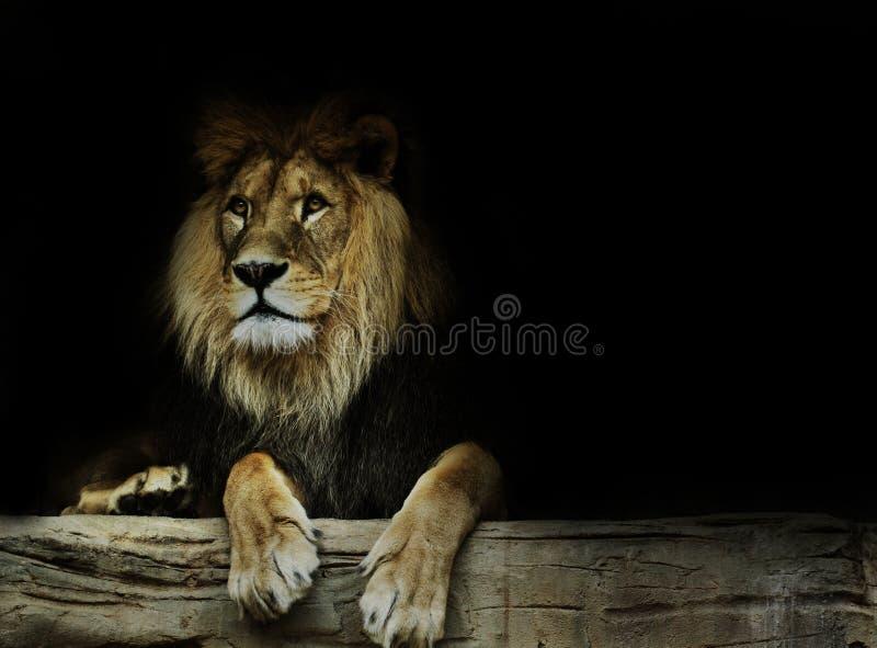 Postcard with lion stock photos