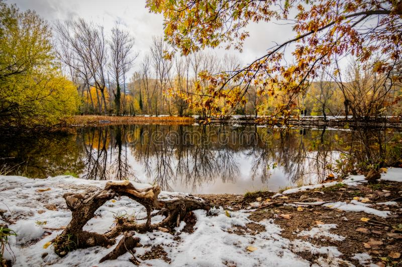 Frozen Root in front of a lake royalty free stock image